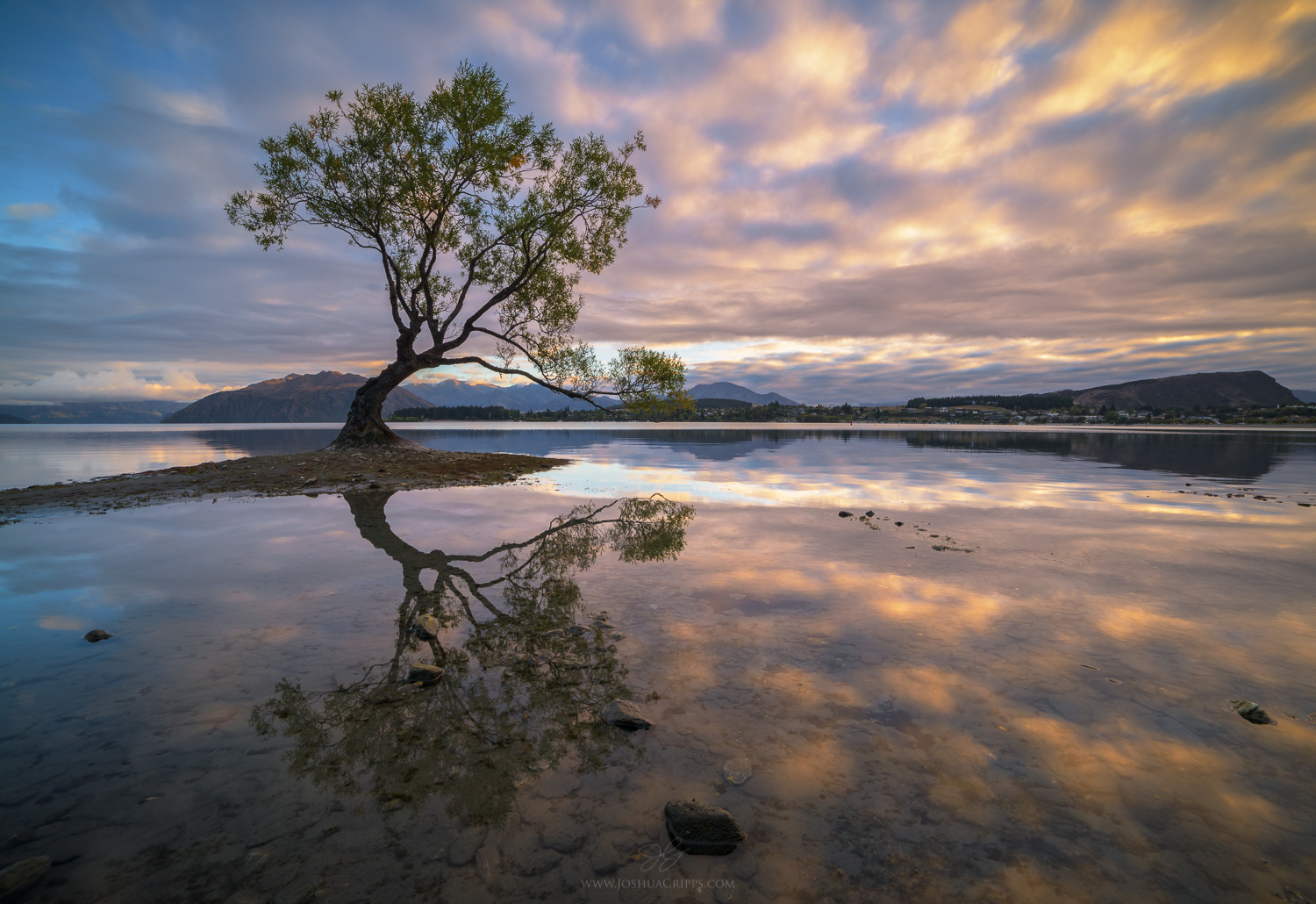 Lake Wanaka Willow sunrise, New Zealand