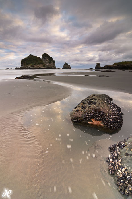 Starfish at sunrise, Motukiekie Beach, South Island, New Zealand