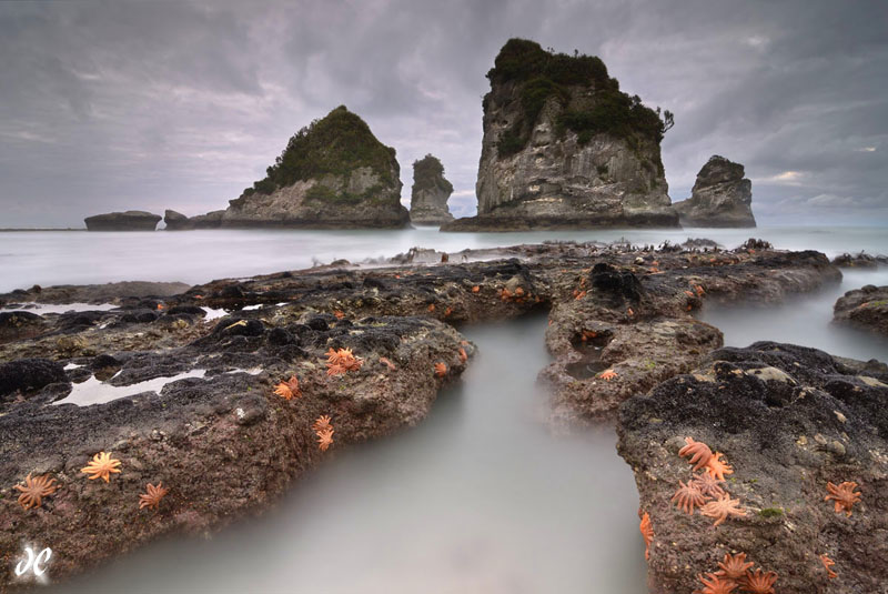 Motukiekie Beach starfish, West Coast, New Zealand