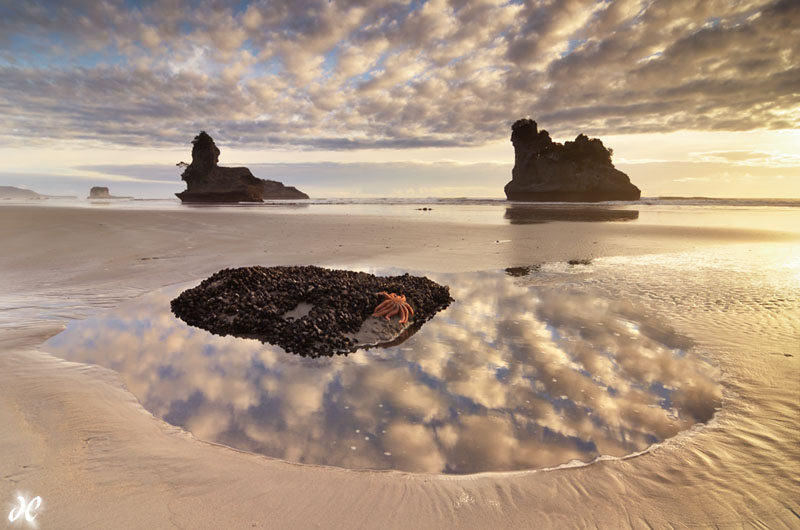 Starfish and seastacks at sunset, Motukiekie Beach, South Island, New Zealand